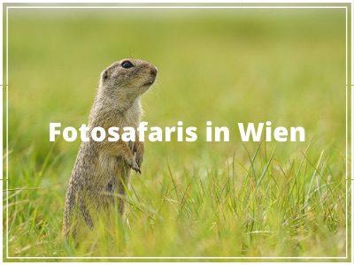 Fotosafaris in Wien