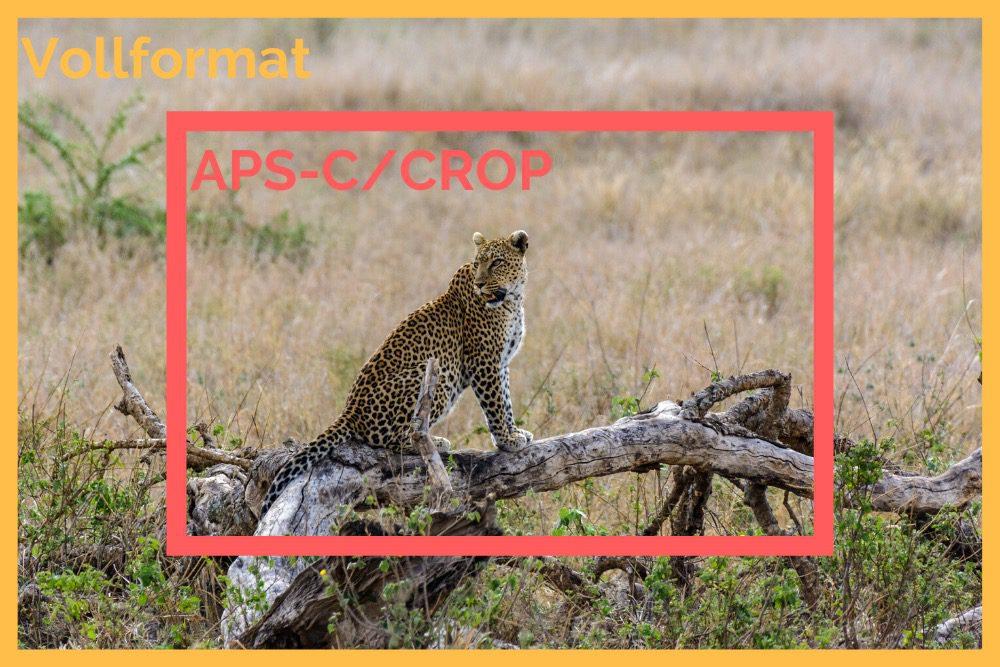Crop Faktor als Brennweiten Verlängerung auf Safari