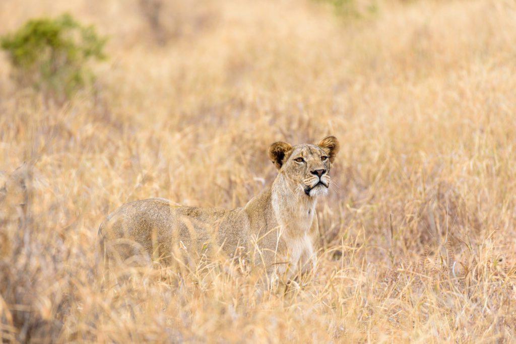 fotografieren auf safari titel