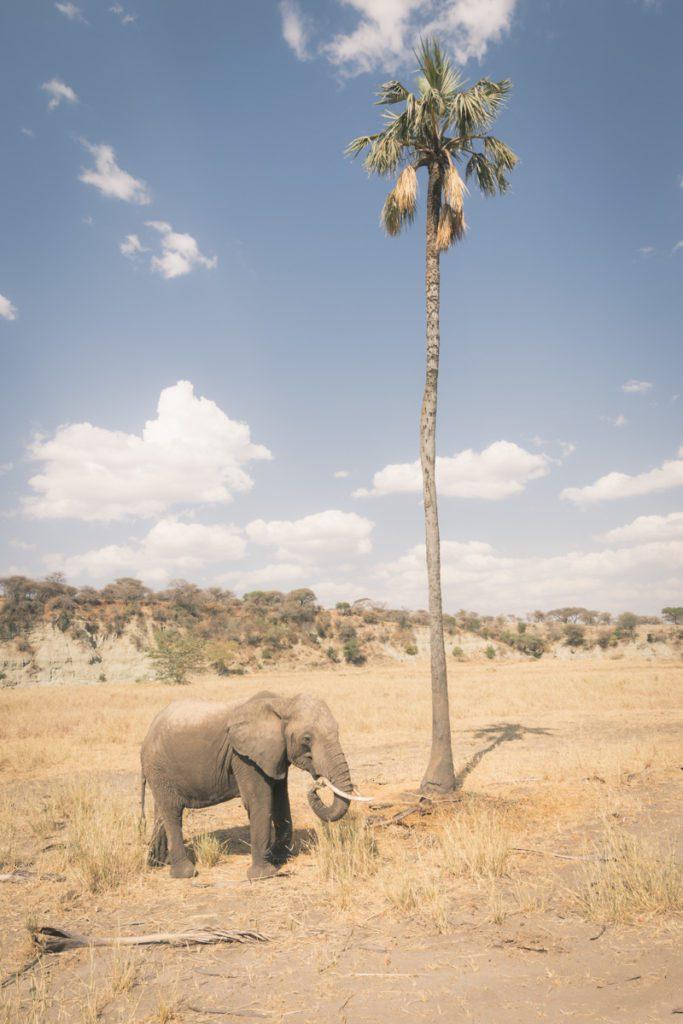 Wandbild Elefant Palme