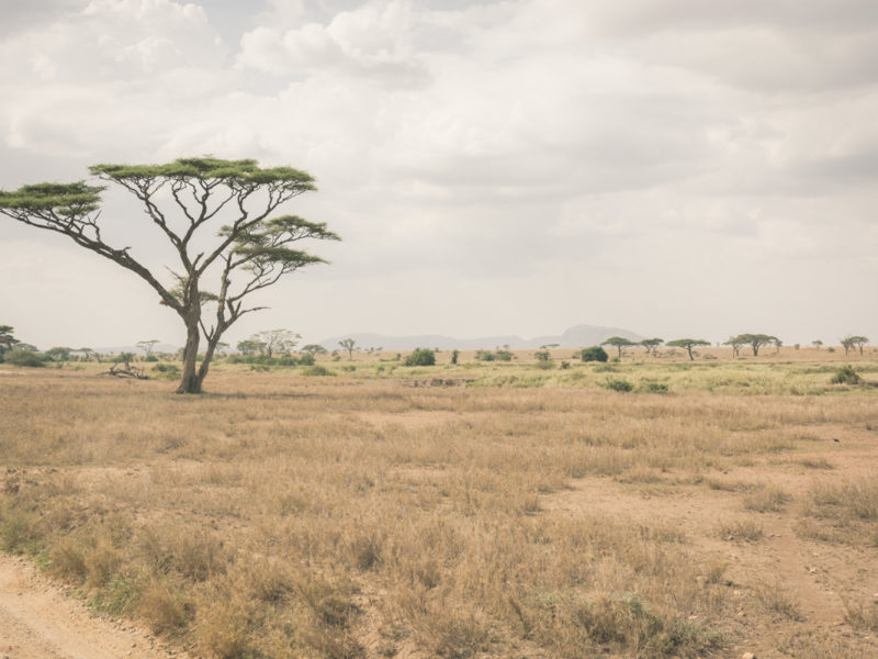 Wandbild Serengeti Tansania