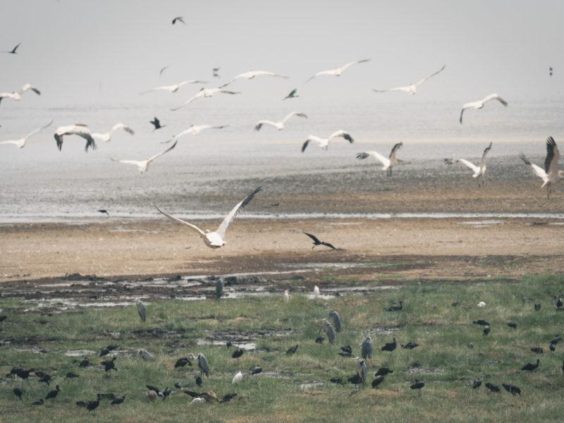 Wandbild Vögel Lake Manyara