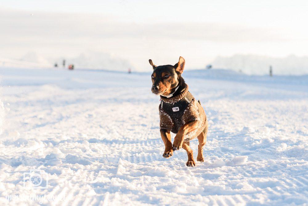 fotografieren im Schnee Licht