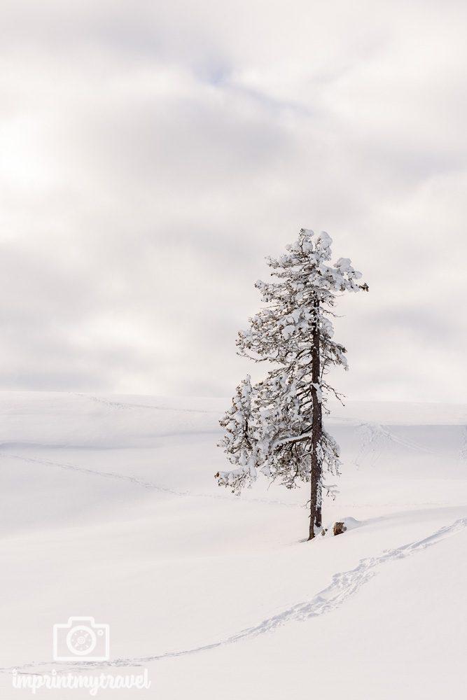 schneefotos minimalistisch