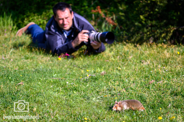 Feldhamster Fotoworkshop Making of