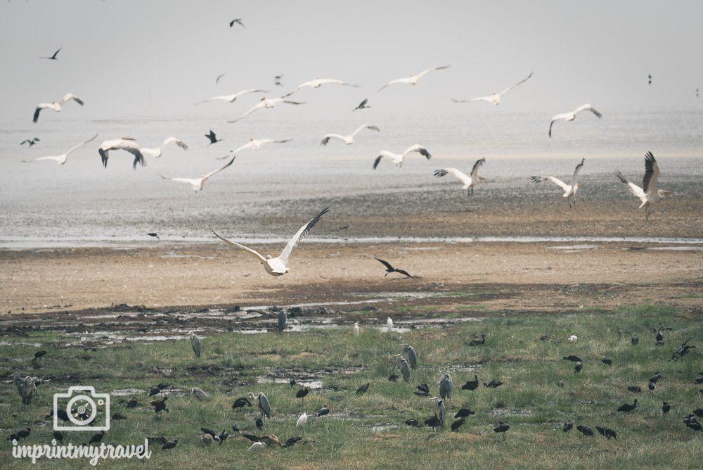 Vögel im Lake Manyara Nationalpark