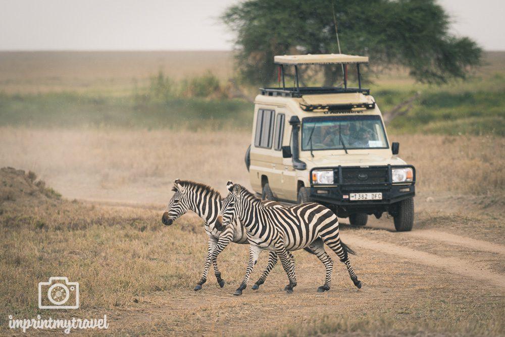 Serengeti Nationalpark Tansania