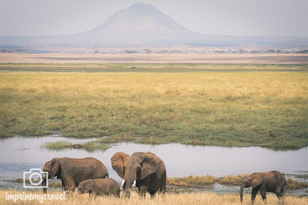 elefanten tarangire nationalpark tansania