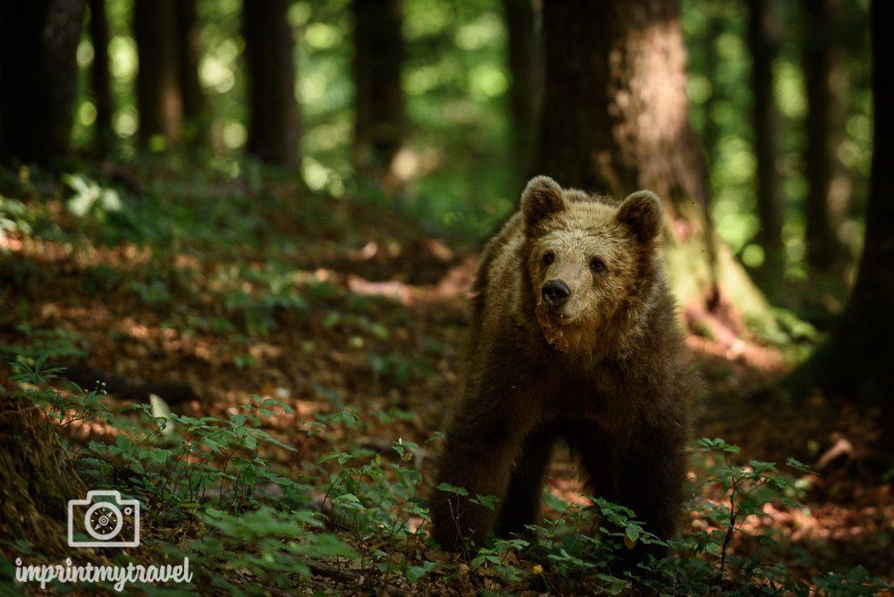 fotoworkshop wilde bären