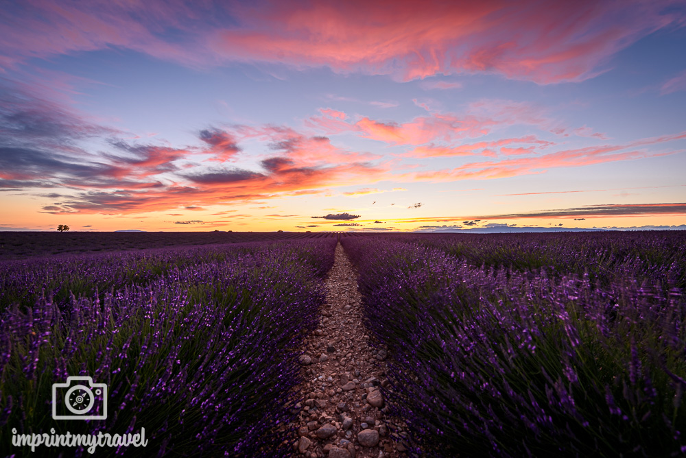 Provence Tipps Lavendelblüte Valensole