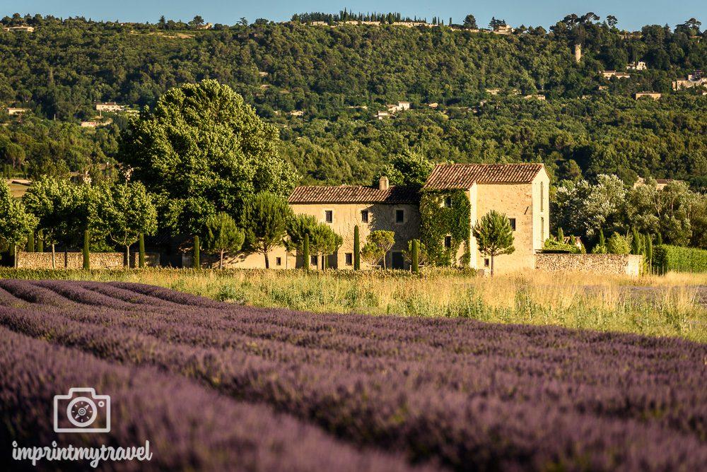 Lavendelblüte Luberon