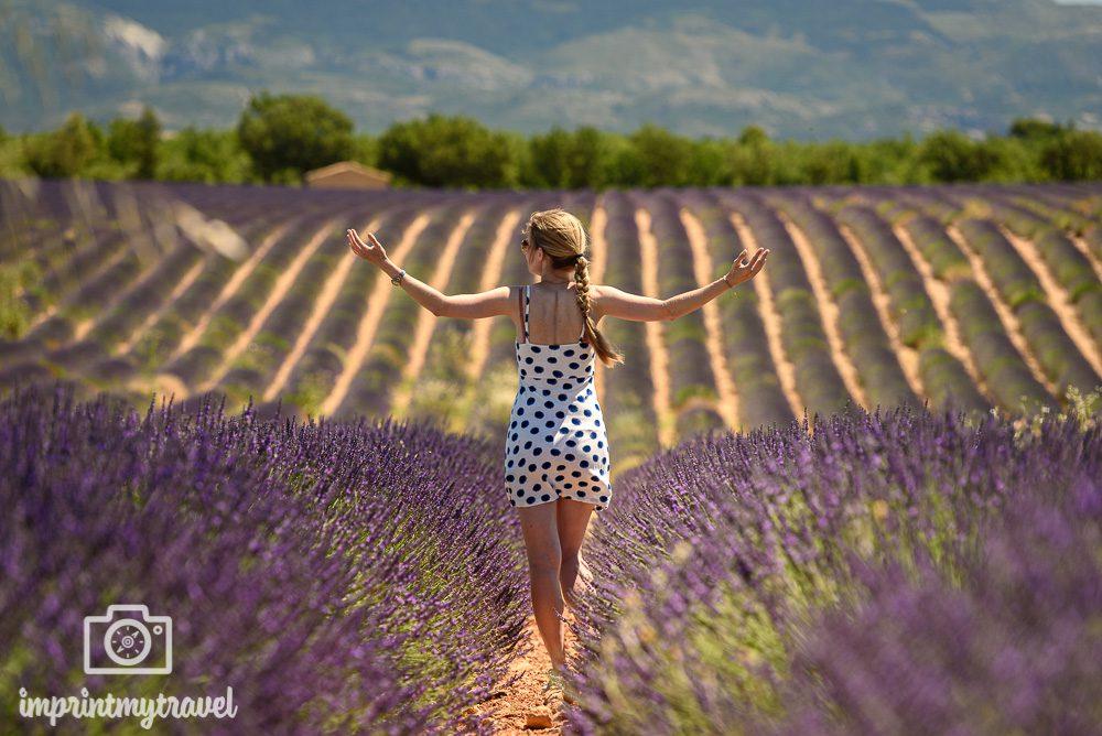 Provence Rundreise Lavendelblüte