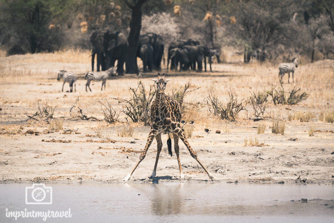 fotoreise tansania 2022