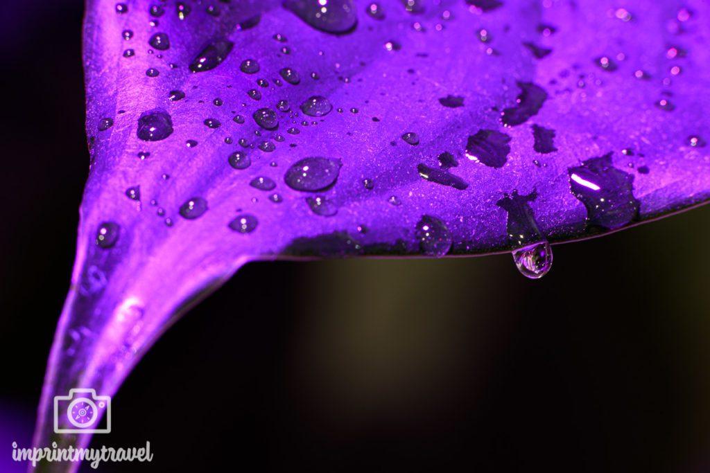 Wassertropfen fotografiert mit NiSi Nahlinse